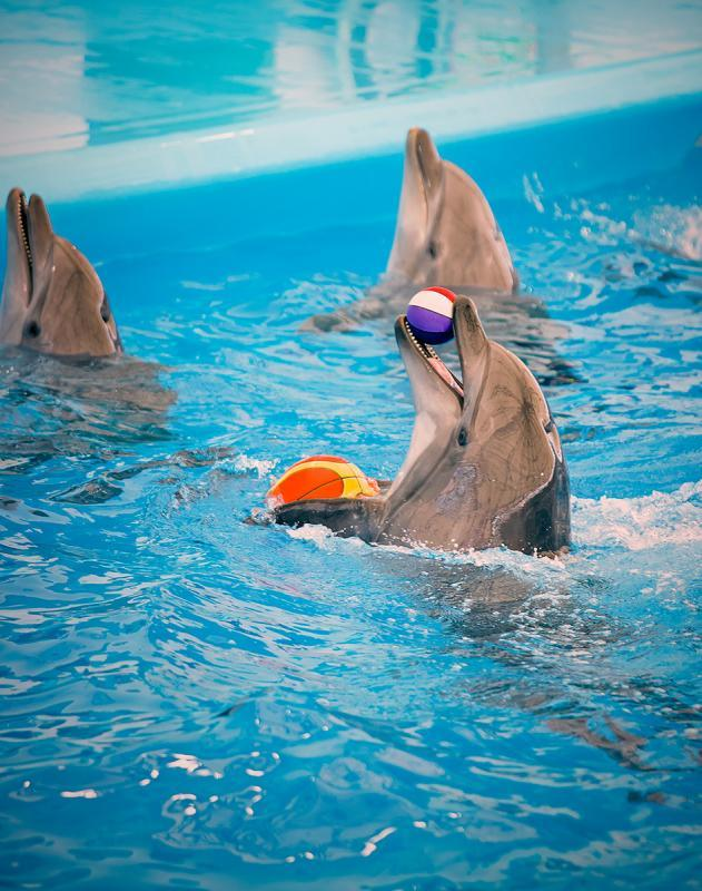Photoset for Pattaya Dolphinarium